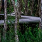 boardwalk-142632_1920